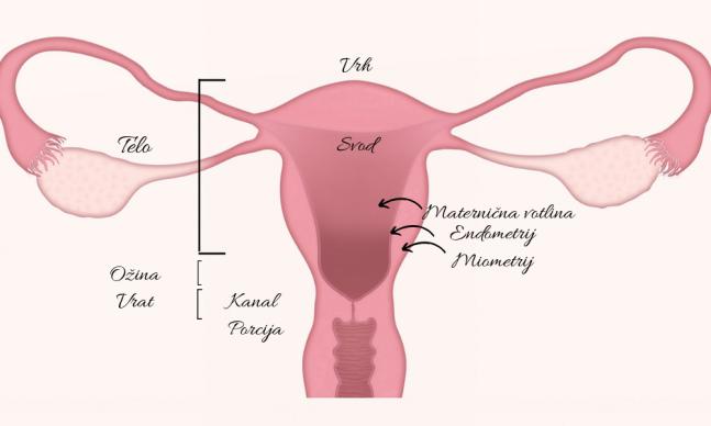 maternica